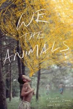 我们,动物
